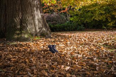 Petworth Park 25.10.2015-3